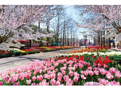 チューリップの見頃に桜舞う-100万本の大チューリップ祭×さくら祭 同時開催!-