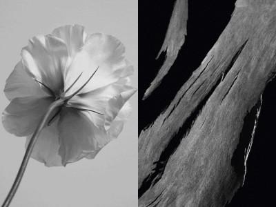 ジバンシイよりオードリー・ヘップバーンが愛し続けた名香「ランテルディ」が60年の歳月を経て、大胆に刷新!