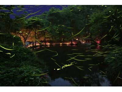 【東伊豆 北川温泉・吉祥CAREN】初夏の風物詩~東伊豆「ほたる鑑賞の夕べ」、ほたる舞う神秘な世界への誘い