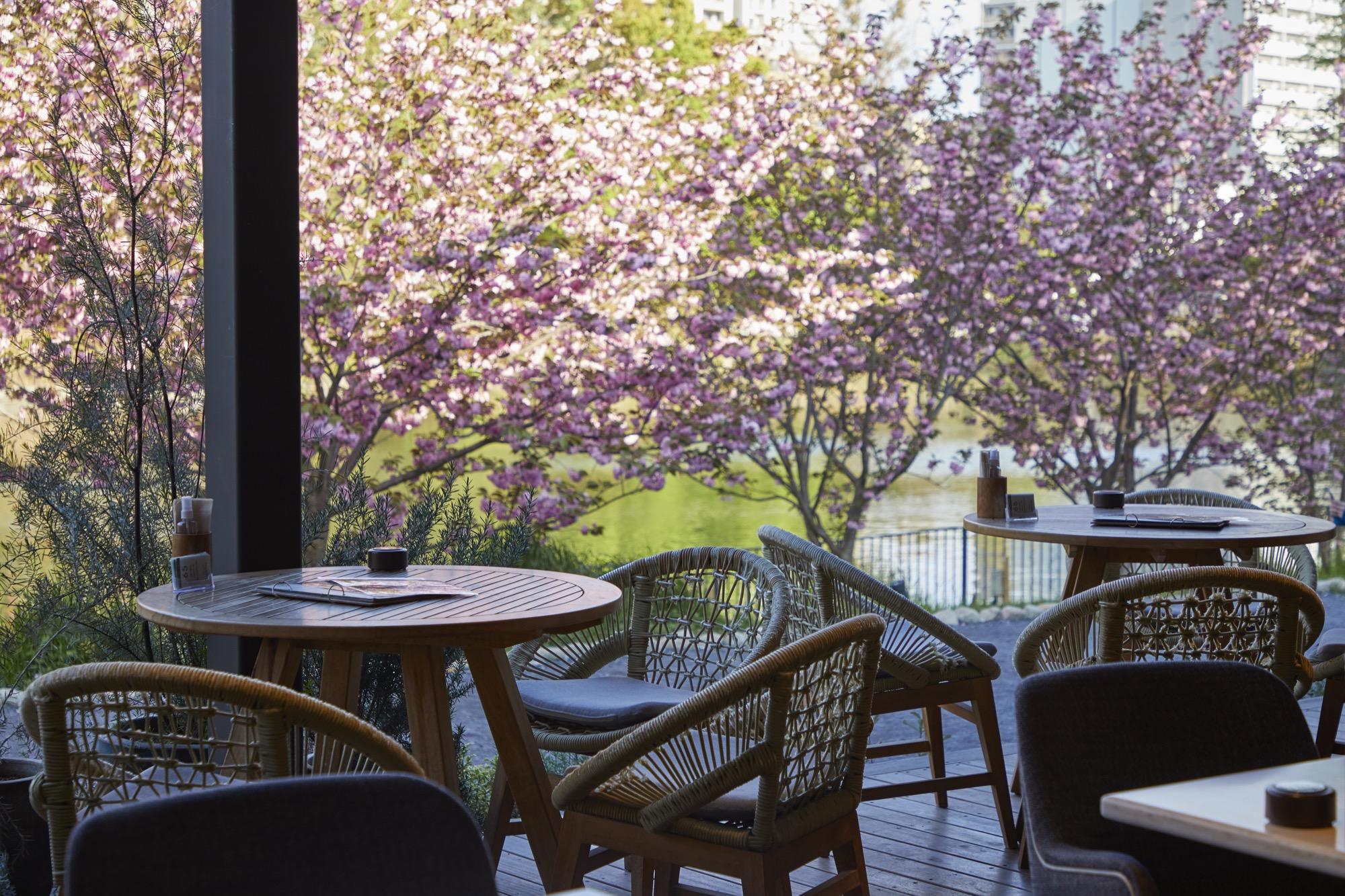 まだ間に合う!大阪 北摂 千里南公園内「バードツリー」に桜テラスが誕生!!満開の桜に囲まれた手ぶらで楽しめるお花見BBQを開催中
