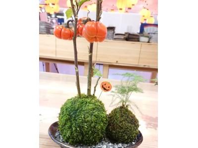 【伊勢苔玉×ハロウィン】大人気の伊勢苔玉にハロウィンをテーマにした作品「ハロウィンめおと苔玉」が登場しました。