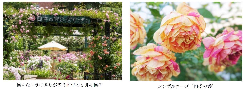 花屋が運営する『練馬区立 四季の香ローズガーデン』2021年5月12日(水)オープン