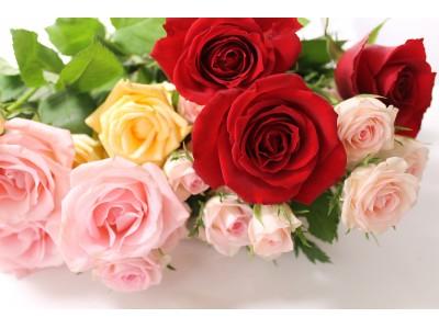 リスパ印西「バレンタイン限定~365本の薔薇スパ~」イベント開催