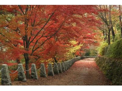 桜だけではない、「吉野山」は秋の紅葉も絶景!!「山、木、樽、酒、米、川」6つのテーマで奈良の山の魅力を伝える産物が集結! 奈良の木マルシェ~山からのおくりもの~ 開催のおしらせ