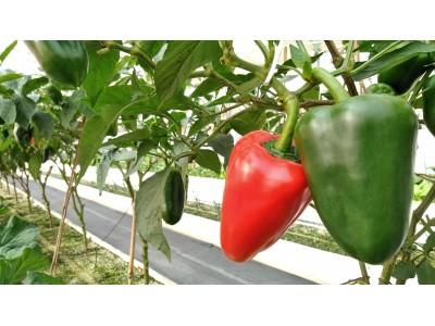 賃貸仲介のハウスコム、野菜農園「ハウスコムファーム」の野菜が社員に大好評!