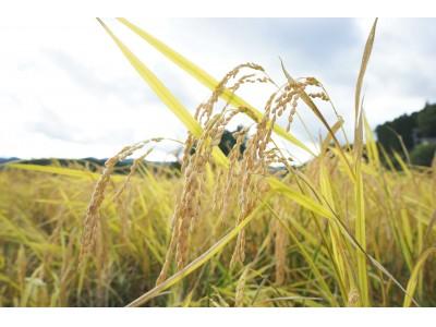 最新ICTを活用した無施肥・無農薬の自然栽培コメ栽培プロジェクトで収穫された 南三陸の自然栽培米「蔵王権現 神米」浅草農園で限定販売開始いたします!
