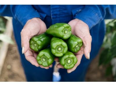 12月13日は「ビタミンの日」!「栄養機能食品」の表示がついた宮崎県産ピーマン『みやざきビタミンピーマン』全国販売開始