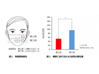 頬上の目立つ毛穴への改善効果を有する複合成分を開発