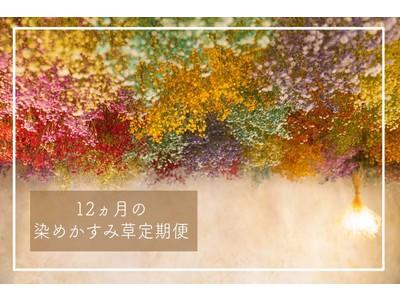 【お花のサブスク】染めかすみ草を《毎月・定額》でお届け。greenpiece が subsc で新メニューをスタート!