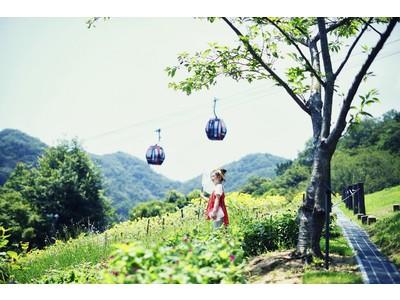 昼は元気に、夕方は金色に輝く。「ひまわり」のつくる多様な景色が楽しめる。神戸布引ハーブ園のひまわり畑は「...