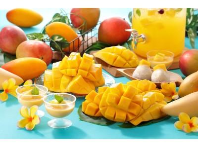 今が旬のアップルマンゴー食べ放題を今年も実施します!『プラス480円でマンゴー食べ放題』