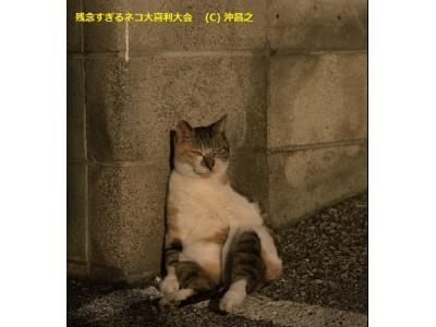 猫写真家・沖昌之「残念すぎるネコ大喜利大会」受賞者発表!!