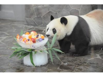 神戸市立王子動物園のジャイアントパンダ・タンタン23歳の誕生日会開催!さらに神戸市のユニークな生きものもご紹介