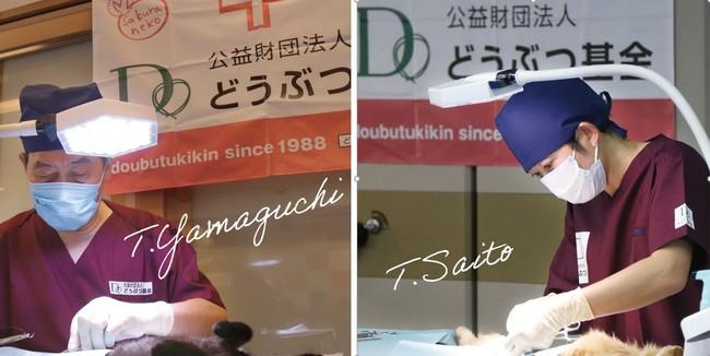 猫の無料不妊手術病院を大阪、福岡、宮崎に新設。7,000匹(全国5万匹)を無料手術 どうぶつ基金 TNR地域集中プロジェクト