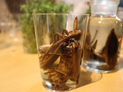食の未来は昆虫にあり!? 100年後をプロトタイプする文化祭『ナナナナ祭』で昆虫食を考える