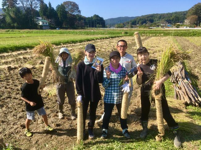 昭和レトロな温泉銭湯玉川温泉にて十日夜(とおかんや)、古代米収穫体験イベントを開催
