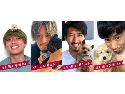 ヴィッセル神戸 ペット限定ファンクラブ「いきものくらぶ」開始のお知らせ