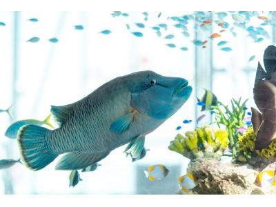 Ginza Sony Parkは真夏も遊び心が盛りだくさん!『Sony Aquarium 2019』『windandwindows|ウインドアンドウインドウズ』が新たにスタート