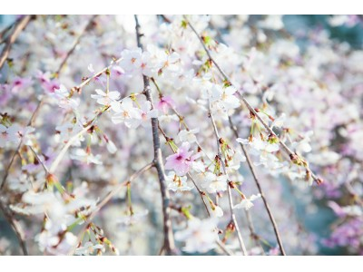 <Ginza Sony Park 2月 ニュースレター>春を感じる植物や、良質な自然派ワインとコーヒーが再び楽しめる!