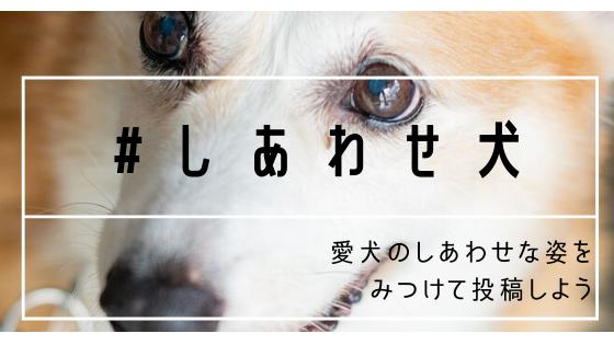 ステイホーム期間中に「#しあわせ犬」発見!株式会社ラングレス「イヌパシー」の先行予約特別割引告知&ハッシュタグプレゼントキャンペーンを開始!