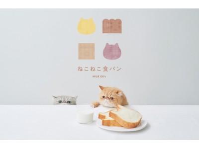 ねこの形の高級食パン専門店「ねこねこ食パン」が2020年7月23日(木)より長野県に登場!