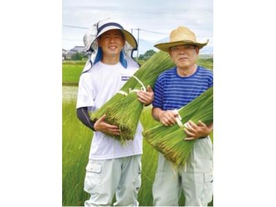 青汁20倍の食物繊維、世界初の「藺草(い草)」を使った【IGUSAプロテイン】を開発。
