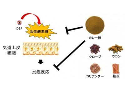 カレー粉およびカレー粉に含まれる複数のスパイスに、PM2.5による炎症反応を抑える効果を確認
