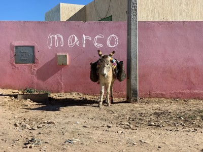 関西初のモロッコのラグ展 by marcoを開催!!