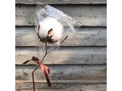 【無料・数量限定】帆布の老舗・タケヤリ製品ご購入で「綿花の種」がもらえる!全商品対象のプレゼントキャンペーン実施中。