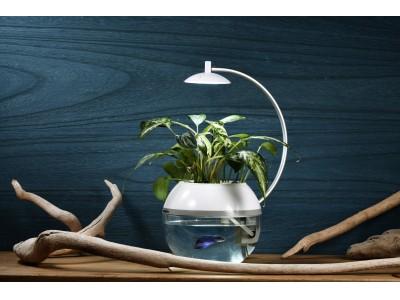 【新商品】間接照明に「生命」を。植物と魚を育成できるLEDライト!?「Herb&Fish X」クラウドファンディング目標達成500%超え!