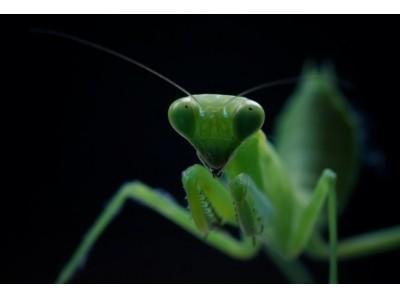 オンラインだからこそ、いろんな場所のいろんな虫を観察できる「集まれ虫の森!オンライン昆虫パーク」を開催!