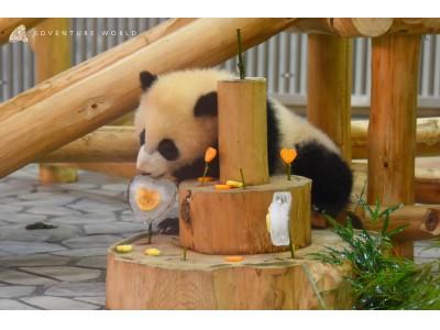 ジャイアントパンダの赤ちゃん「彩浜(さいひん)」が生後7か月を迎えました
