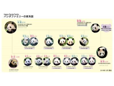 8月14日生まれのジャイアントパンダの赤ちゃん「彩浜(さいひん)」 丈夫な体づくりのため、日光浴を実施しています