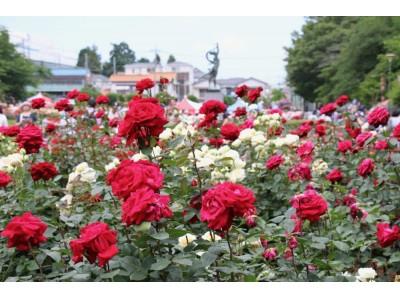 与野公園のバラの開花に合わせ「ばらまつり2019」を開催します
