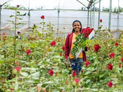 エチオピアのバラ農園で働く女性の生活環境改善を目指して「Share the Bloom」キャンペーンを実施 ~美しさは力になる。咲かせよう、可能性の花。~