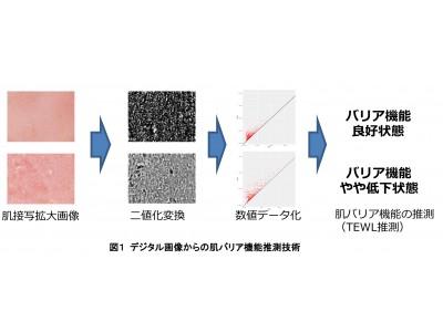 肌バリア機能を画像から簡便かつ迅速に計測する技術を開発 トポロジカルデータアナリシスと機械学習を用いた画像解析技術