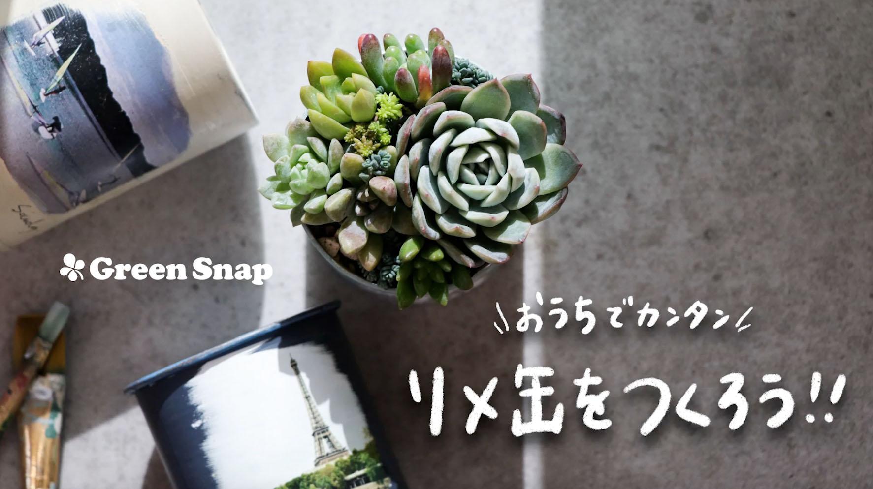 植物アプリ「GreenSnap」がYouTubeチャンネルを開設!おうちでもみどりの育て方を学べるYouTube LIVEも開催予定。