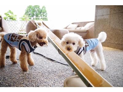 愛犬との納涼夏旅!有馬グランドホテル『DOG UP VILLA(ドッグ アップ ヴィラ)』にて「愛犬流しそうめん」を開始!