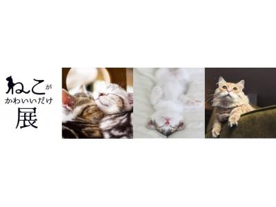 全国のかわいい猫写真、大募集!! あなたが撮影したかわいい猫が展覧会に この夏 究極の'にやにや空間'が全国に登場!! 「ねこがかわいいだけ展」全国4会場で開催