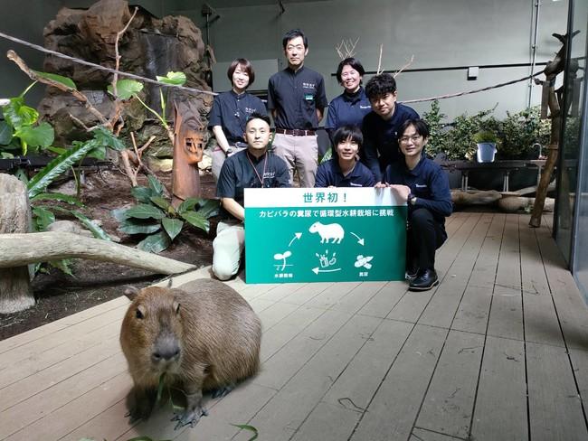 カワスイ 川崎水族館と株式会社ティエラポニカ カピバラの排泄物を用いた有機養液による「循環型水耕栽培」の展示を開始