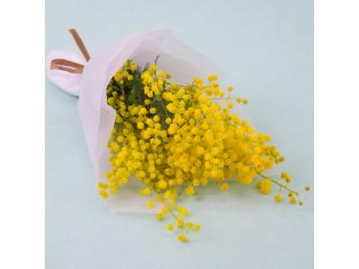 3月8日、愛と幸せを呼ぶミモザの花で女性に感謝を伝える日、フェスタ・デラ・ドンナ、COCONKARASUMAにて今年も開催。