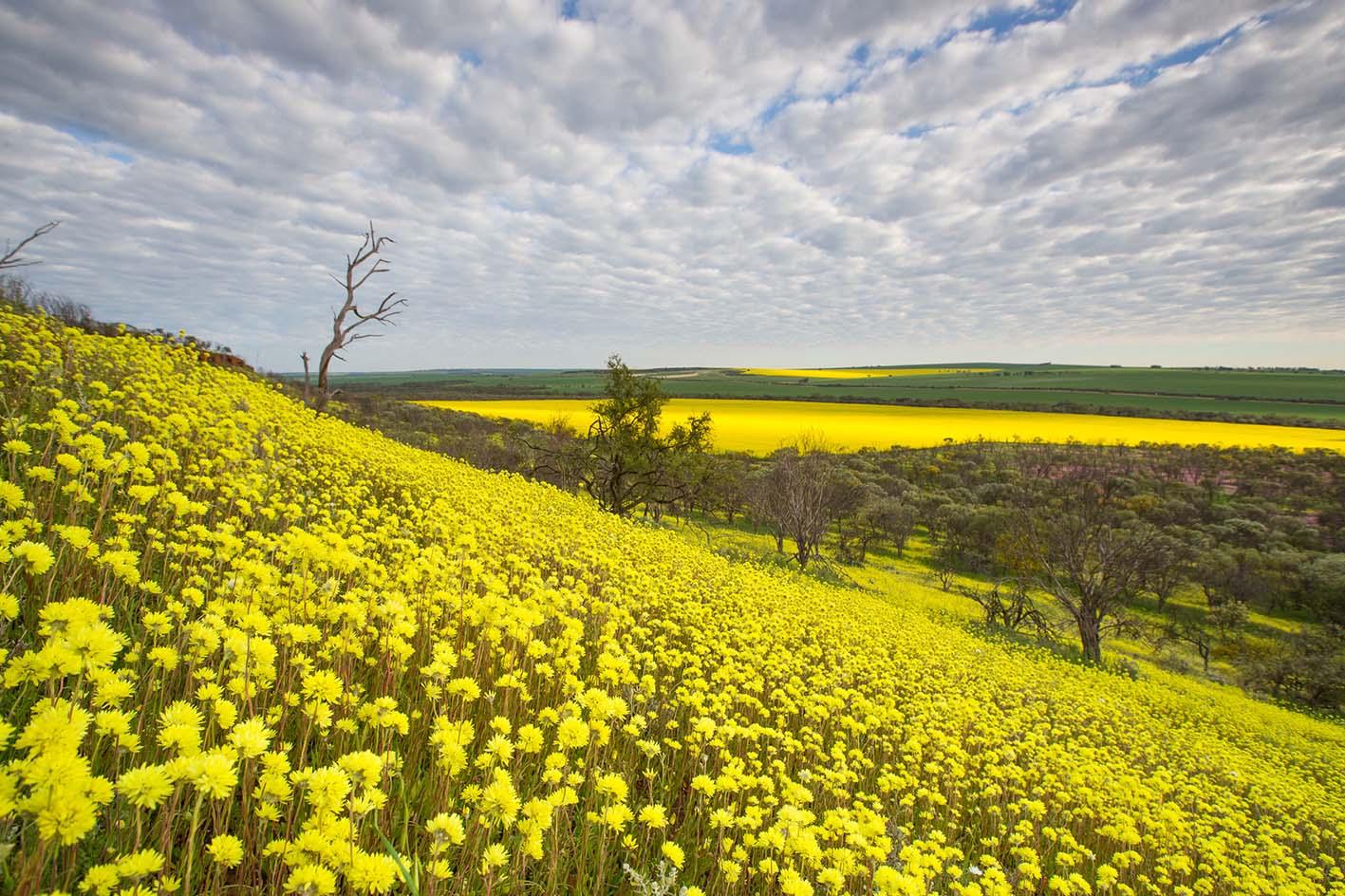 1万2000種以上の野生の草花が大地を美しく彩る、西オーストラリアはワイルドフラワー天国!