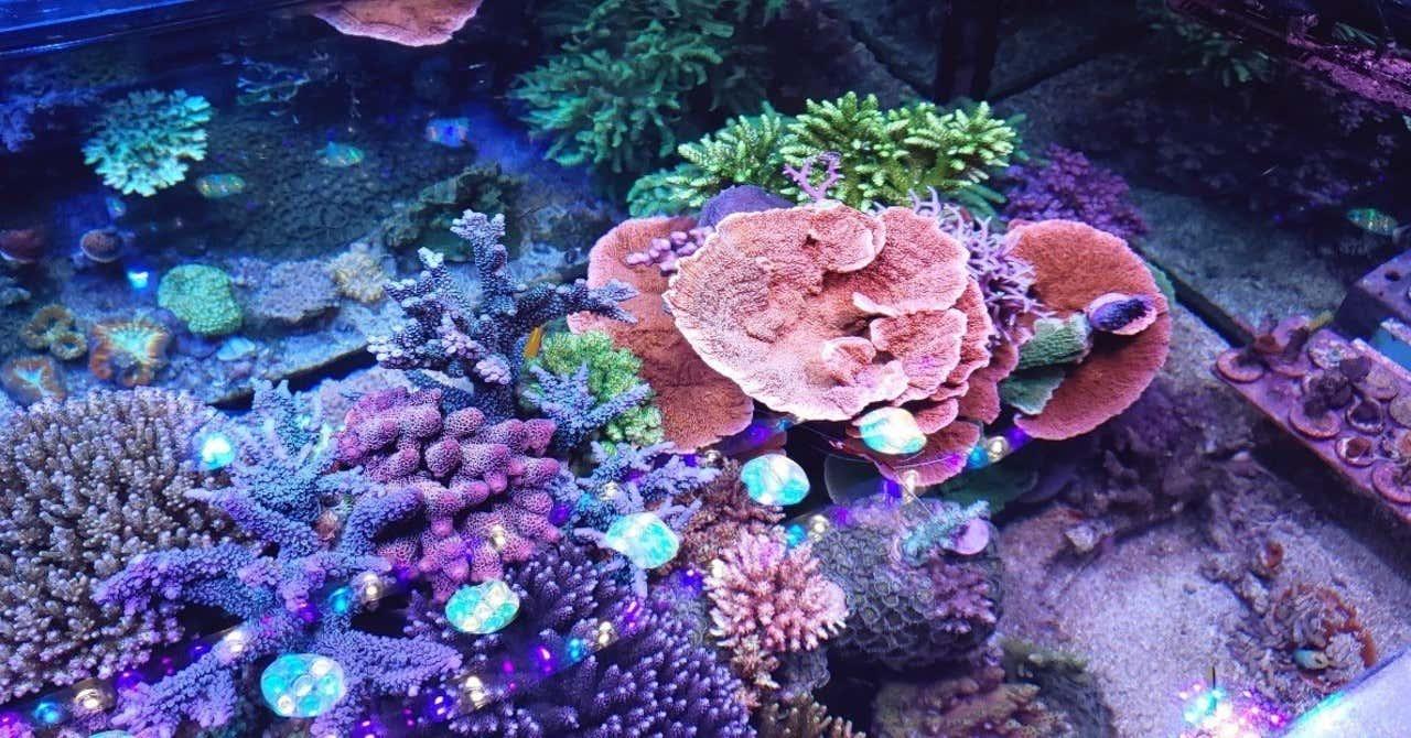 【3/5・サンゴの日】環境移送技術を活かしたサンゴの保護、飼育プロジェクトで企業のCSRとSDGsを推進 ~海環境を考えるウェビナーイベントを3/22に開催~