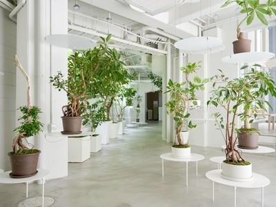 業界初プランツケアラボを併設の「観葉植物専門店REN」が、8月12日、延床面積300平米に増床し、リニューアルオープン