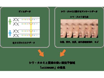 日本メナード化粧品、ゲノム解析から将来のシワ・タルミを予測する遺伝子領域を発見!