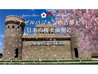 失われた古都を日本の桜で満開にしたい!親日国・アゼルバイジャンに桜の苗木1000本を寄贈するクラウドファ...