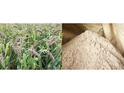 岩手県産ヒエのヌカを世界で初めて化粧品原料化、サステナブル原料として「ヒエヌカオイル」「ヒエヌカエキス」の取扱を開始
