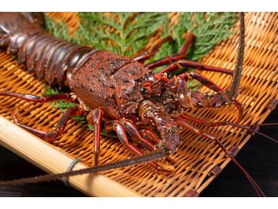 【伊豆ハウス】ジビエ、伊勢海老、アワビ、金目鯛を楽しめる炭火焼バーベキュープラン発売開始