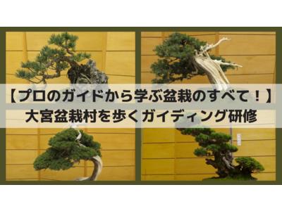 【プロのガイドから学ぶ盆栽のすべて!】大宮盆栽村を歩くガイディング研修