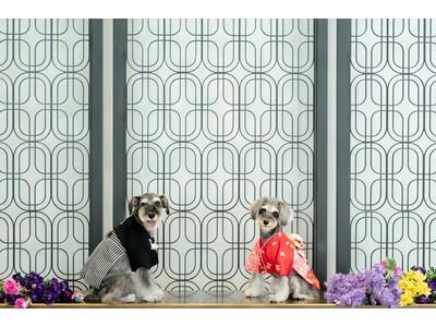 ベスト-アニバーサリーウエディングドレスから新たな命を吹き込むサステナブルなエコドレス生地を活用した犬用の衣裳ブランドDreSSED ONEが2021年8月2日(月)に初登場